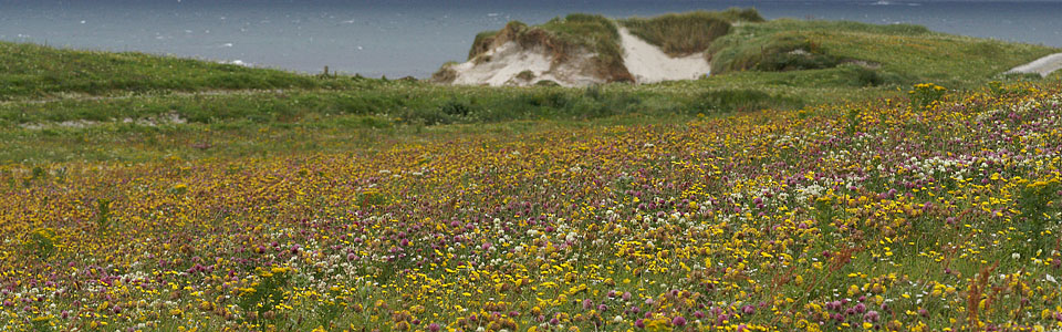 Tour Calendar machair in bloom