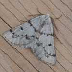 Grey Scalloped Bar